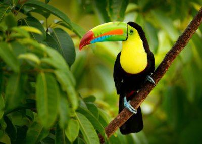 Voyage scolaire Costa Rica