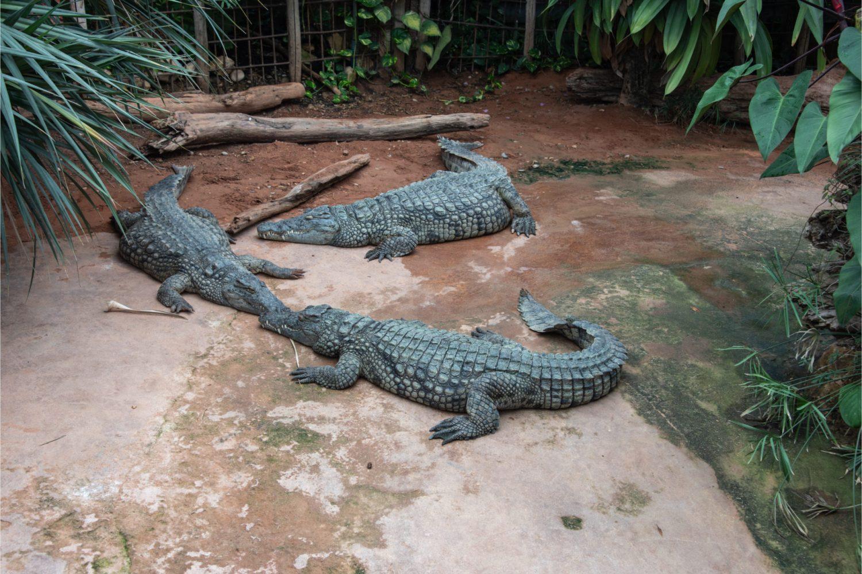 Voyage scolaire Drôme Ferme aux crocodiles
